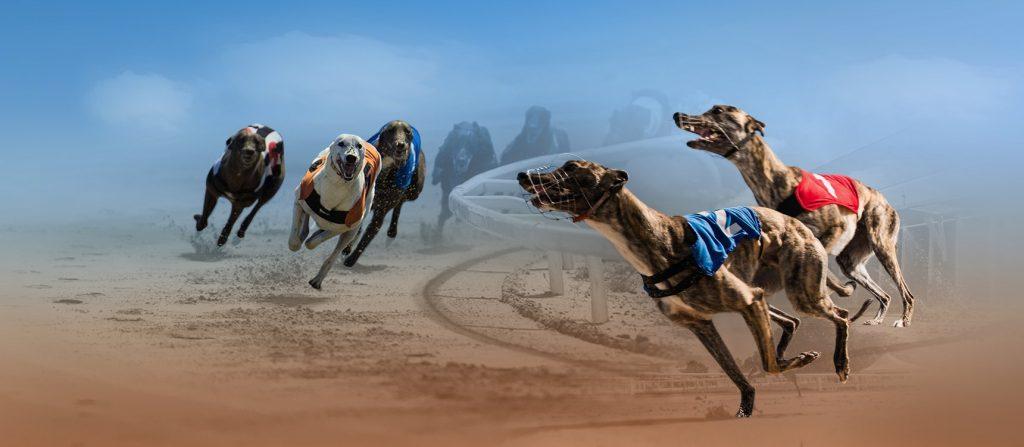 Greyhound betting - Odds på hunder